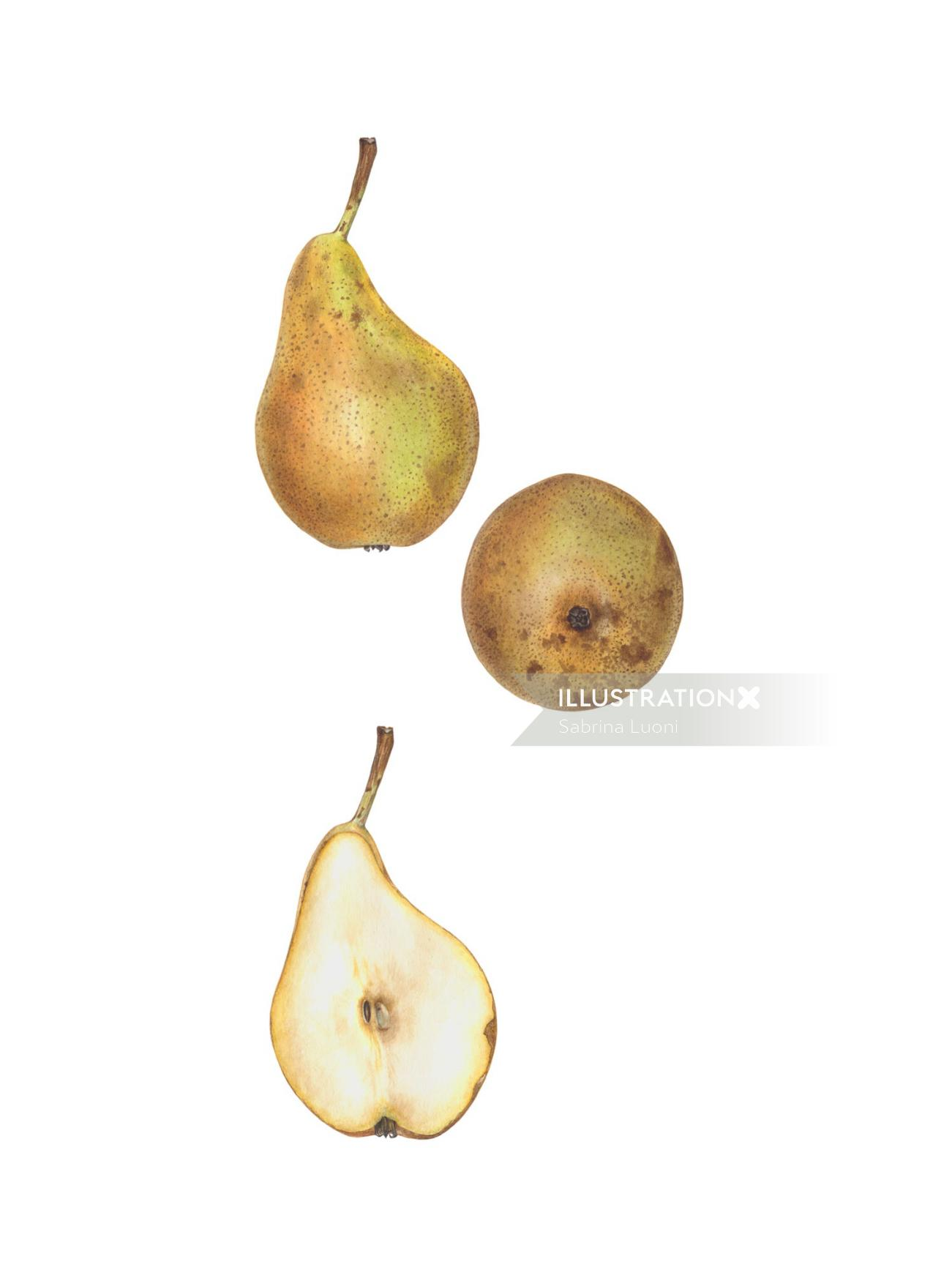 'Conference' Pear (Pyrus communis 'Conference').