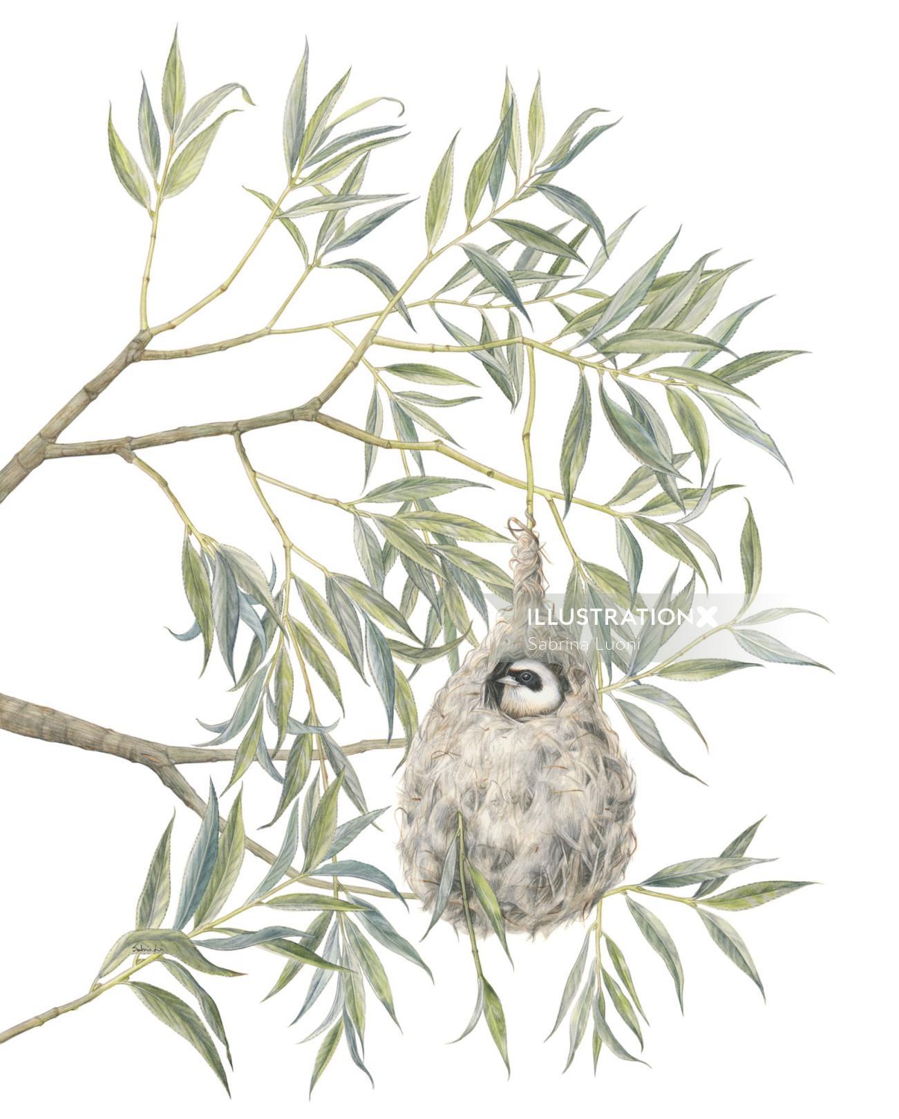 Eurasian Penduline Tit (Remiz pendulinus)