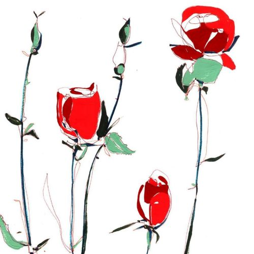 Red roses illustration by Sarah Beetson