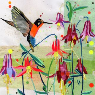 Bird | Aves illustration collection