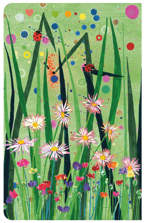 Aster | coleção de ilustração de flores