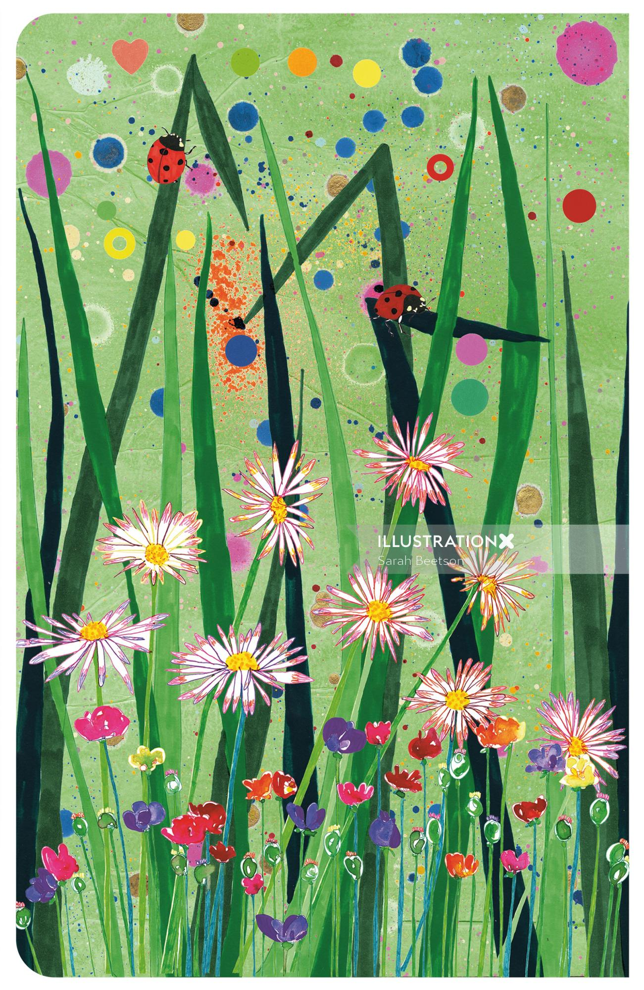Aster   flowers illustration collection