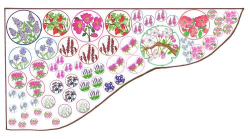 Ilustração da natureza por Sarah Beetson