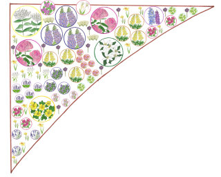 Flower plants illustration by Sarah Beetson