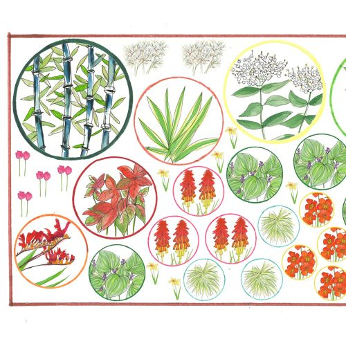 Plants illustration by Sarah Beetson