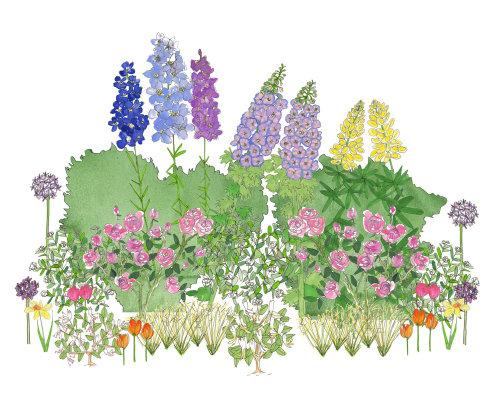 Pintura digital de plantas de sinos de canterbury