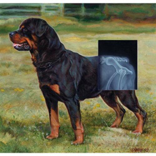 Graphic,X-Ray Dog