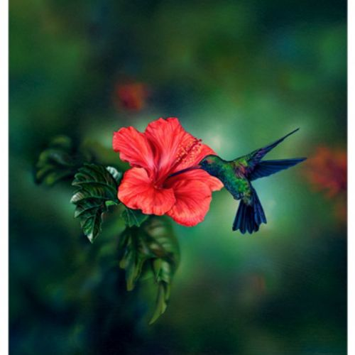 Animals humming bird with flower