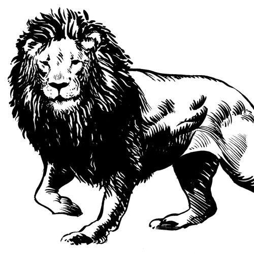 Animals Lion