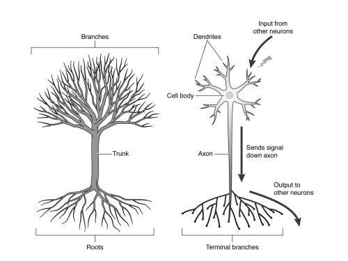 black and white nature tree