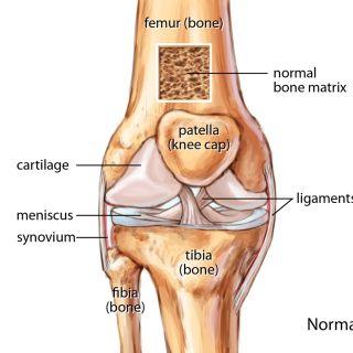 Normal knee joint illustration by Shelley Li Wen Chen