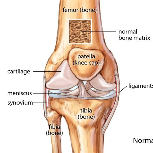 Normal knee joint illustration by Shelley Li Wen Chen