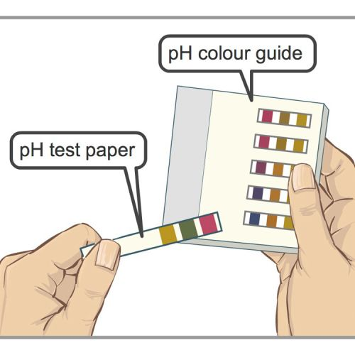 NG Tube pH Test illustration by Shelley Li Wen Chen