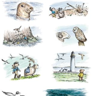 Illustration for various traditional birds