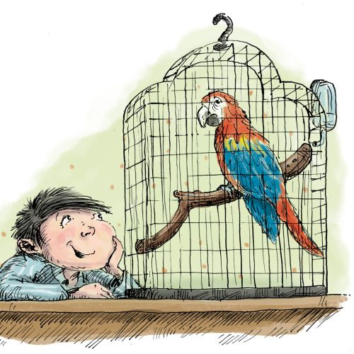 Animals Young boy talking to his pet parrot.