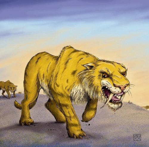 Animal Illustration,  Sabre tooth tiger walking by Sholto Walker