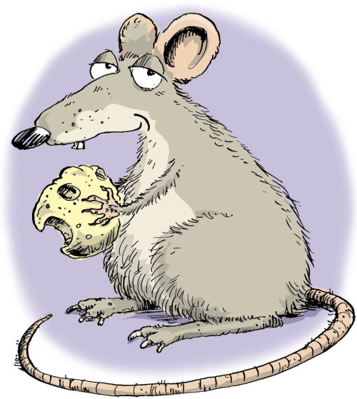 cartoon rat illustration by Sholto Walker