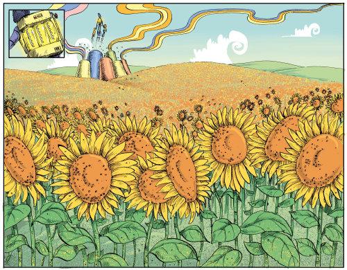 Sunflowers illustration by Sholto Walker