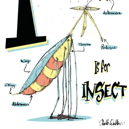 Insect illustration | Humourous style gallery