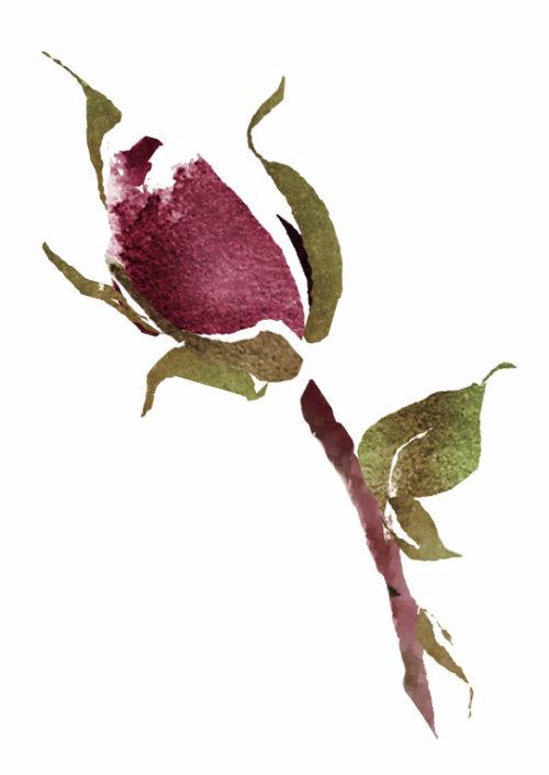 Bouton de rose en vrac