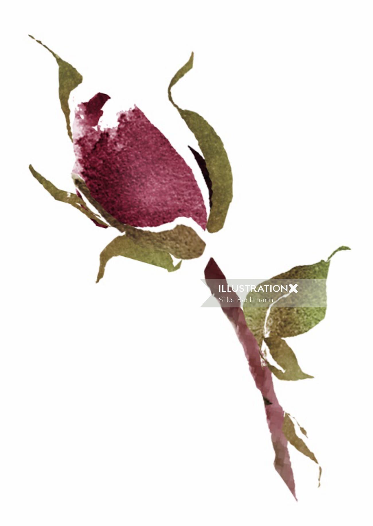 Loose rose bud