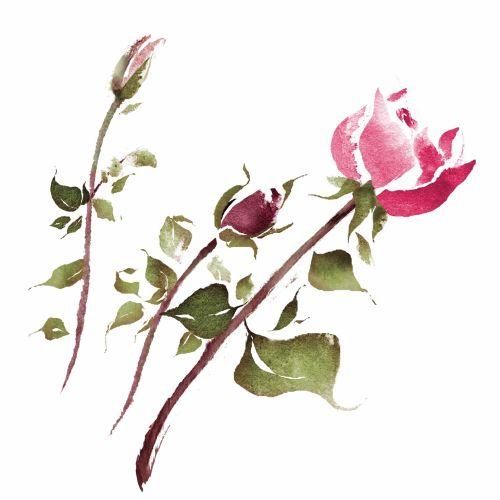 Loose rose flowers