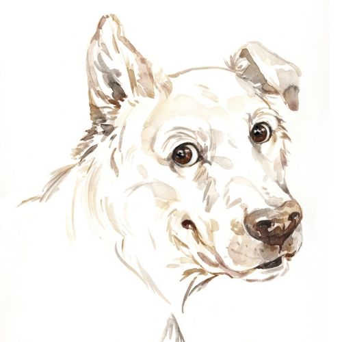 Animals white dog staring