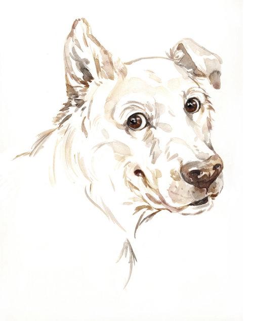 Animaux chien blanc regardant