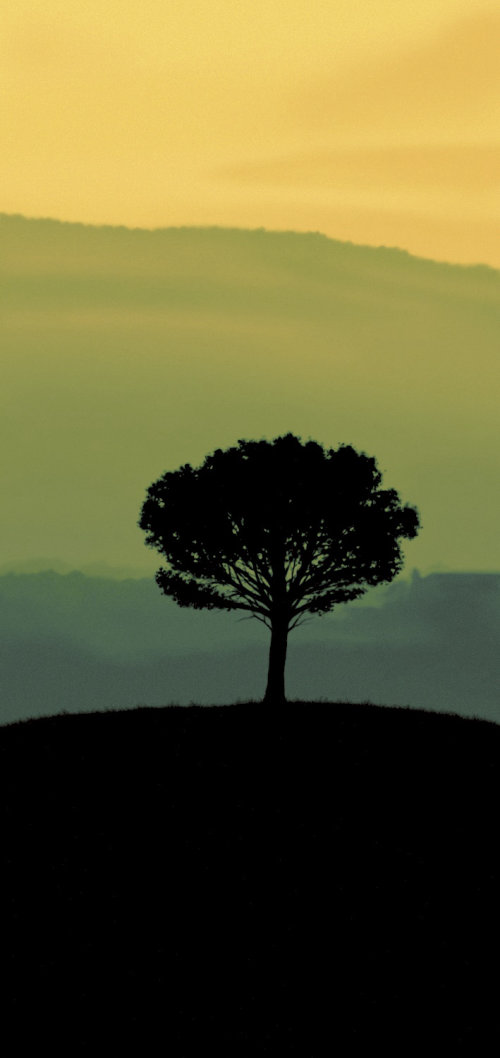 Silhouette of tree in green landscape for Sainsburys