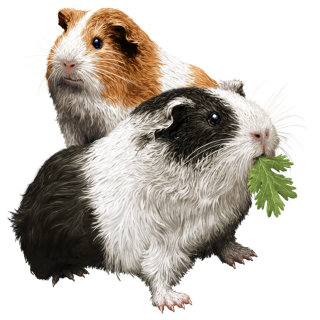 Guinea Pigs for pet food packaging