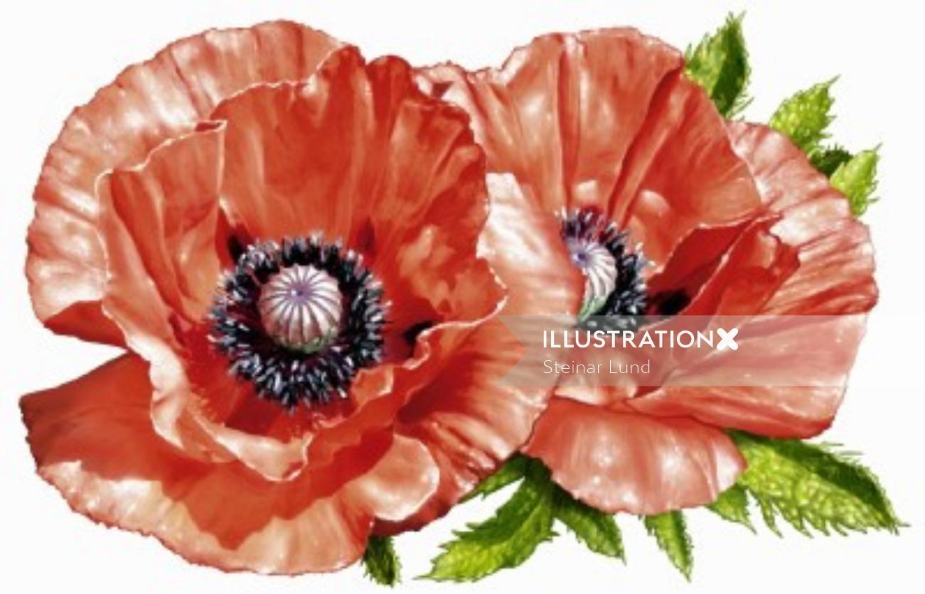 Flower illustration by Steinar Lund