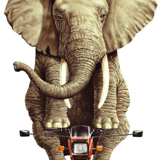 Elephant riding small motorbike illustration
