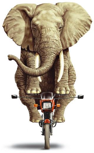Elephant riding small motorbike illustration