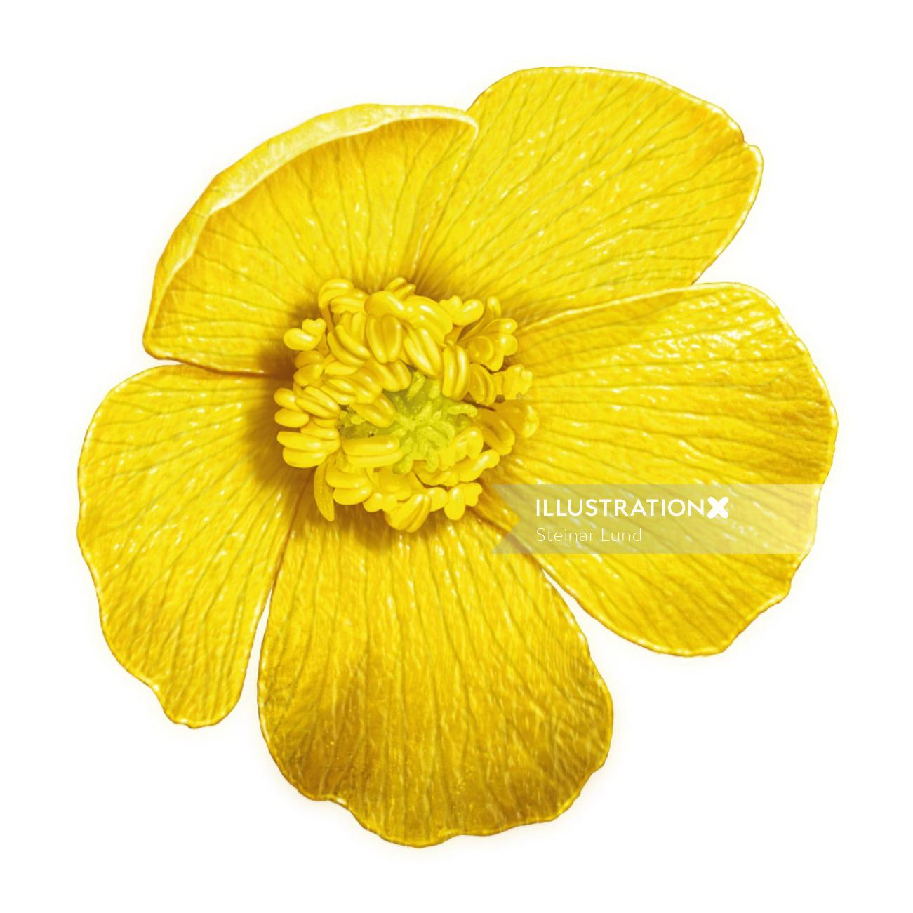 Yellow Flower illustration