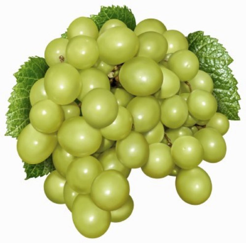 Photorealistic illustration of green grapes