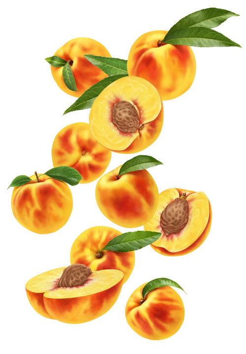 Peaches fruit illustration