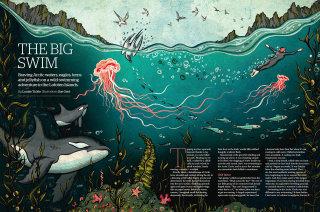 Jellyfish illustration for the big swim