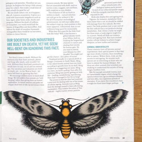 Editorial butterfly illustration