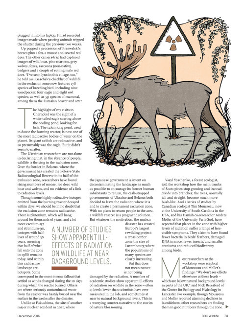 Editorial illustration of reindeer
