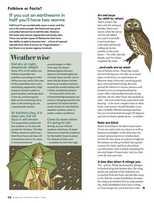 Editorial owl illustration