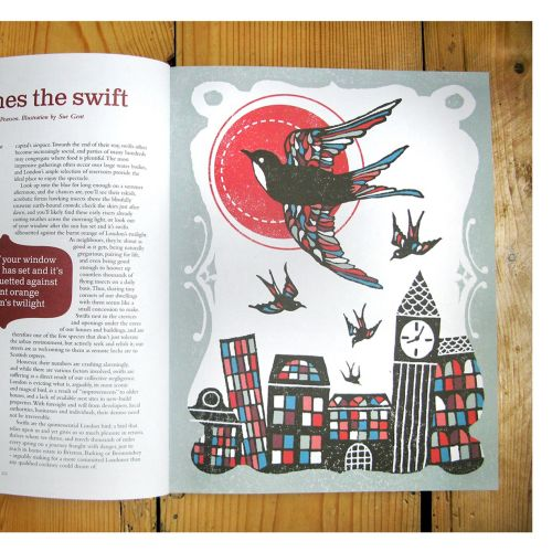 Editorial swift comes the swift
