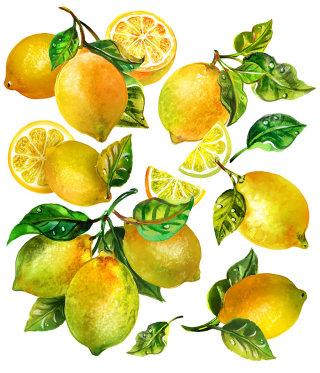Flying Grapefruit Illustration