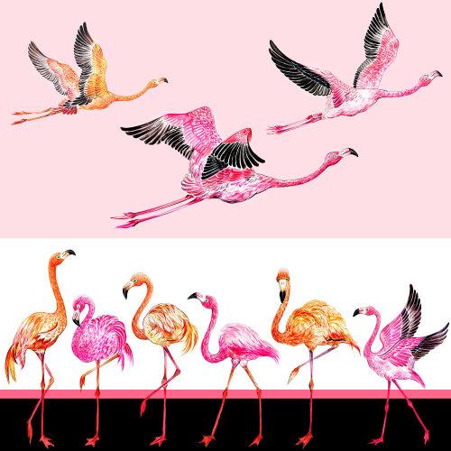 flamants roses, oiseaux, vol