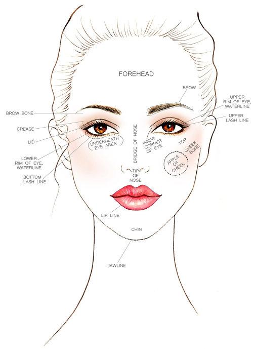 carte de graphique de visage de beauté