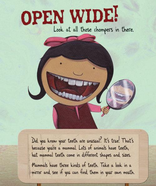 Open The Window, Children's teeth book illustration