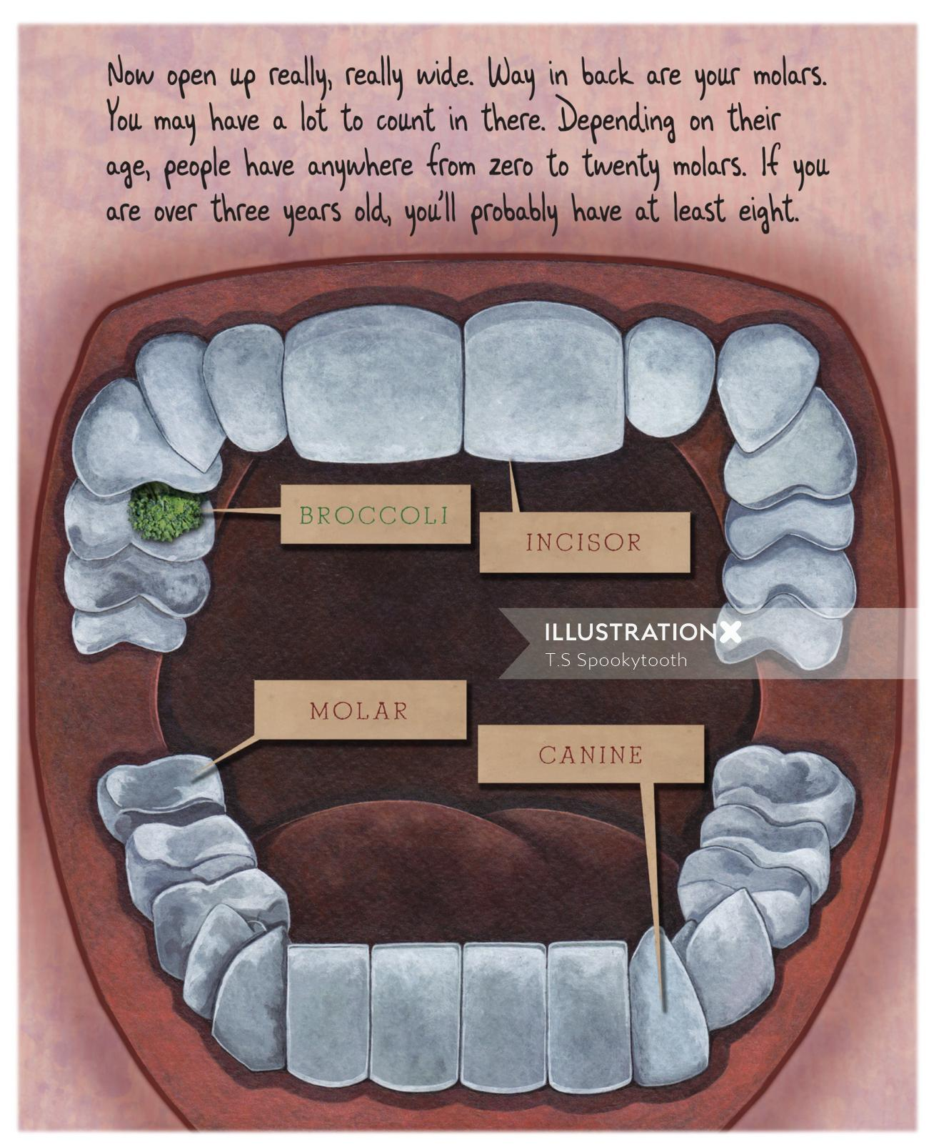 Dental illustration for children's book