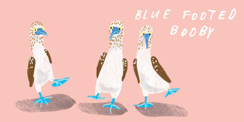 Animal Blue Footed Booby