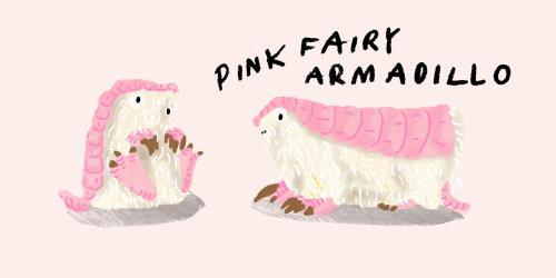 Drawing Pink Fairy Armadillo