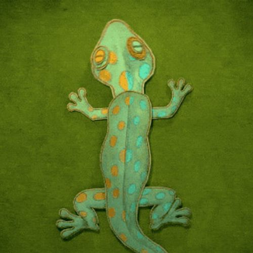 Animated gif of Lizard spotted gecko