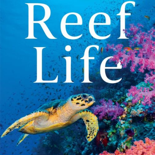 Reef Life Animation Book Cover
